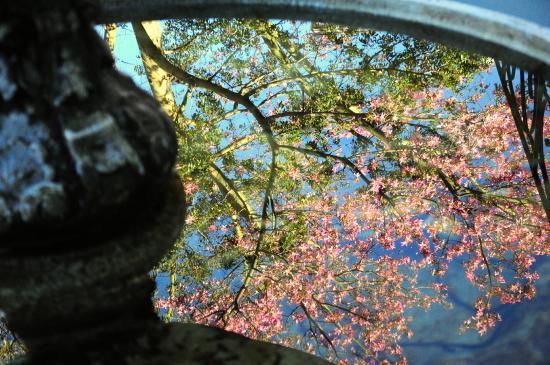 Dieu Donne Stellenbosch: Dieu Donne fountain