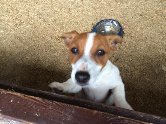 Muckross Riding Stables B&B: One of the puppies