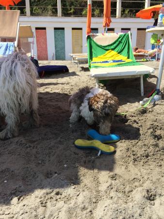 Ci si diverte coi giochi e con la sabbia! - Picture of Bagni Capo ...