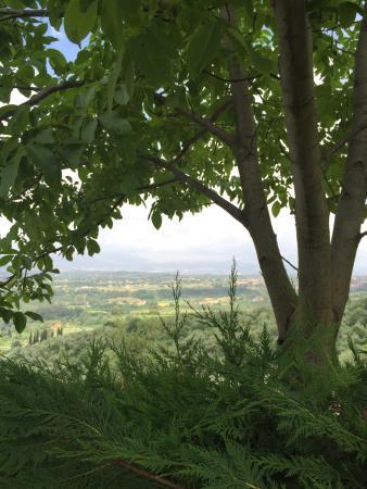 Villa La Capitata: photo2.jpg