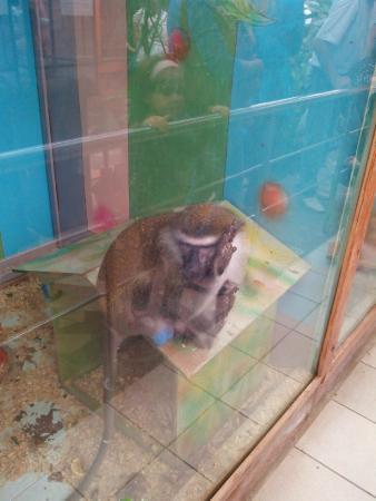 Voronezh Zoo