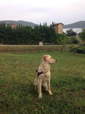 Agriturismo Il Cucciolo: photo0.jpg
