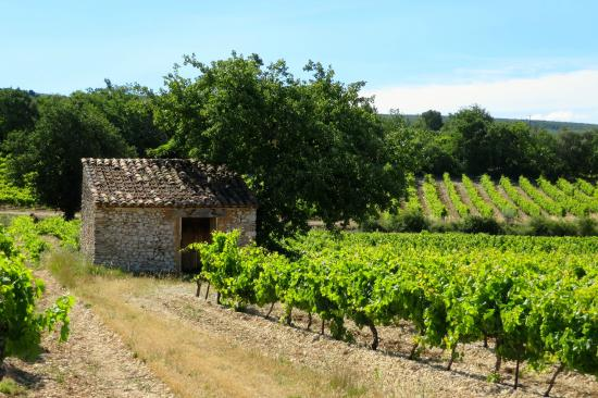 TerraVentoux: another hectare of vines