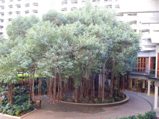 Hale Koa Hotel: Gus the Bayna Tree