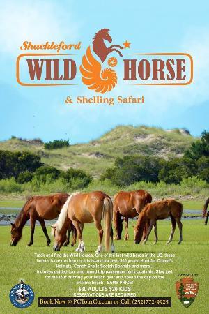 Shackleford Wild Horse & Shelling Safari: SWH&SS Poster