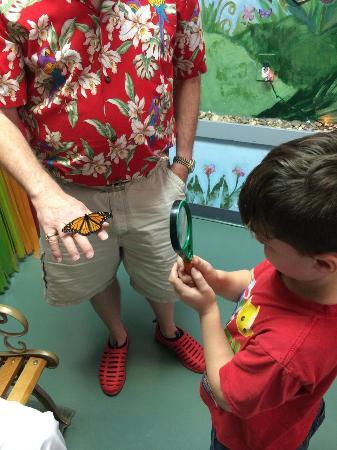 Bear Mountain Butterfly Sanctuary: In the Flutterarium