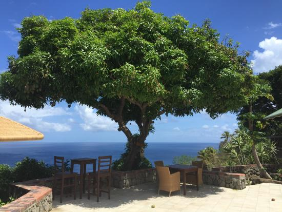 Brand-new Julie mango tree at the resort's main pool. - Picture of  PV95