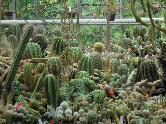 Botanische Tuin Amsterdam : Cactus kas foto van botanische tuin zuidas amsterdam tripadvisor
