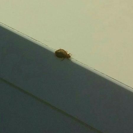 Portugal Ways Conde Barao Apartments: Bed bugs :-(