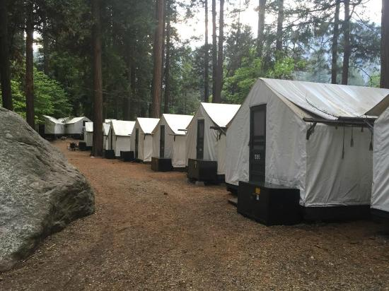 Half Dome Village Curry Village tents & Curry Village tents - Picture of Half Dome Village Yosemite ...