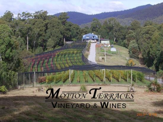 ‪Motton Terraces Vineyard & Wines‬