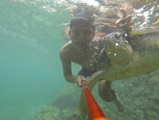 Bira, อินโดนีเซีย: Berenang bareng penyu