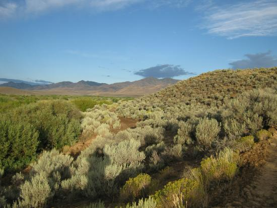 Cottonwood Guest Ranch: a view from ranch