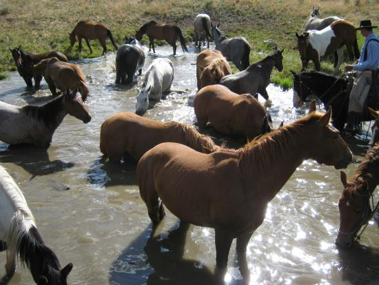 Cottonwood Guest Ranch: watering hole