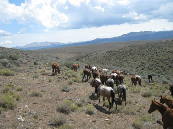 Cottonwood Guest Ranch: horse drive