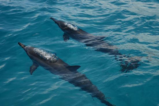 Na Pali Makai : Hawaiian Spinner Dolphins