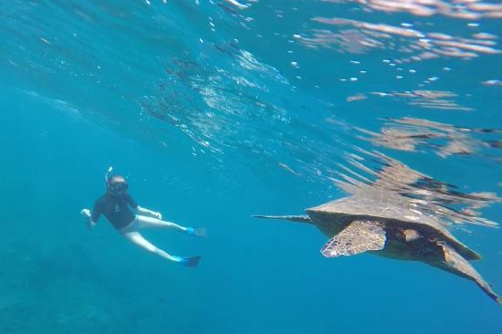 Na Pali Makai : Sea Turtle off the Na Pali coast
