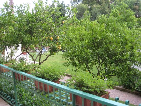 Hotel Eliseo Park's: jardin vu de la chambre