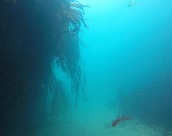 Atlantic Scuba: The blue, blue sea at Fraggle Rock, a regular site for beginners