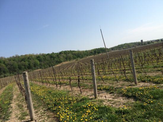 Niagara College Teaching Winery : photo0.jpg