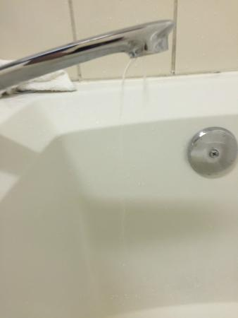 Quality Inn & Suites Redwood Coast: Would not turn off. Dripping water in California drought  :(