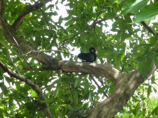 Parque Cervantes: black squirrel in the park