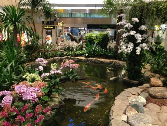 Orchid garden at changi picture of orchid garden koi for Koi pool water gardens thornton