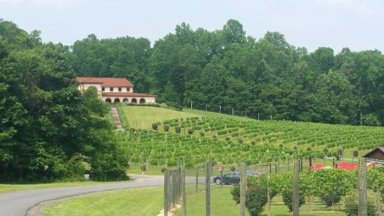 Running Hare Vineyard: Great quick trip!