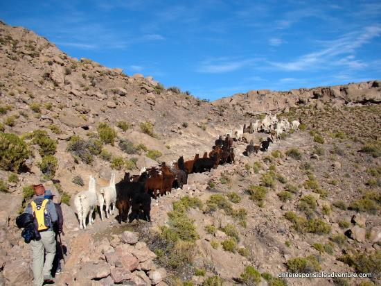 Mistico Outdoors: One day as a llama shepherd at the Chilean Andes