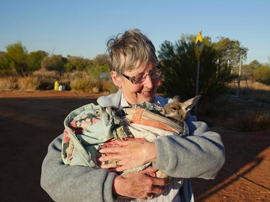 Kangaroo Showing Love To Brolga Picture Of The Kangaroo - Kangaroo sanctuary alice springs