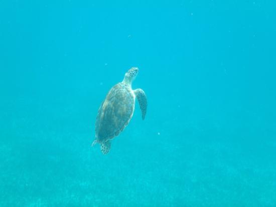 Κόλπος Simpson (Λιμνοθάλασσα), Άγιος Μαρτίνος: Tortuga