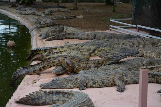 L'Etang-Sale, Reunion Island: Crocos amorphes et entassés