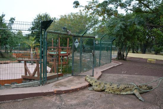 L'Etang-Sale, Reunion Island: Porte du parc à crododiles ouverte pendant 10 minutes sans employés à proximité...