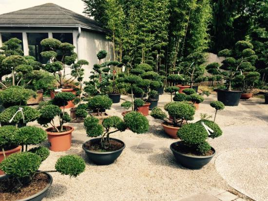 Pflanzenhandel Huben