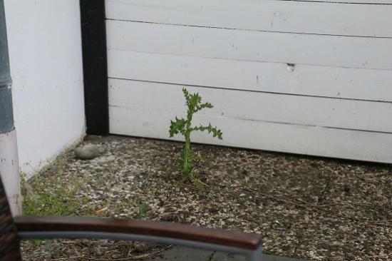 Terrassenbegrünung nach Art des Teichhofes