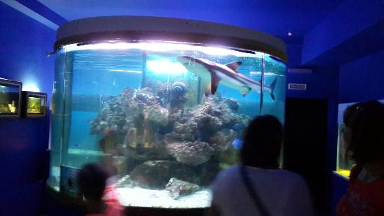 Oceanarium and Exotarrium