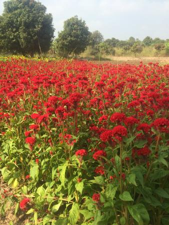 Bosba Day Tours: Flower Farms-Bosba.co