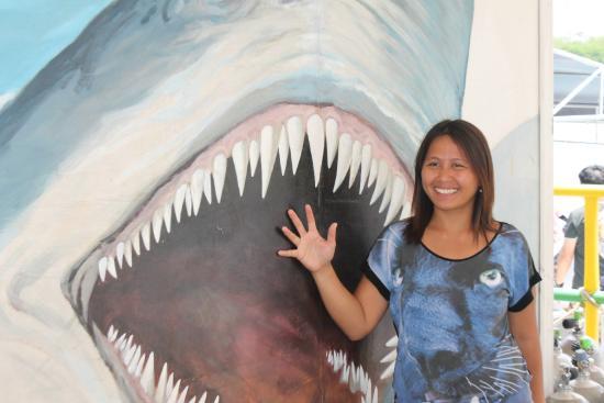 Cebu Yellow Submarine: shark