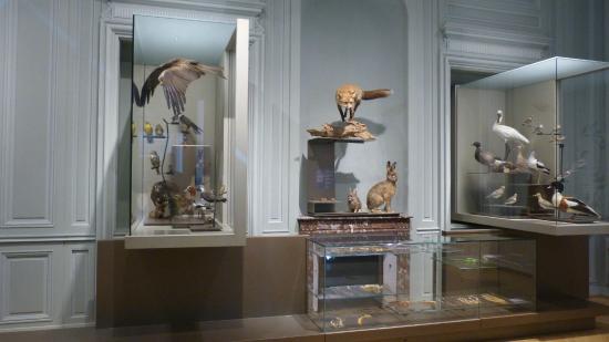 Musee d'histoire naturelle de La Rochelle : le territoire littoral