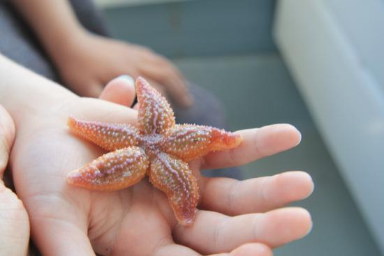 Finestkind Scenic Cruises: sea creatures from the trap.