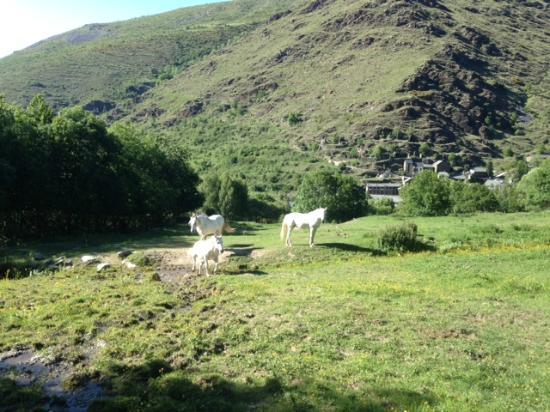 Valcebollere, Francia: Vue des chevaux et village en contre-bas