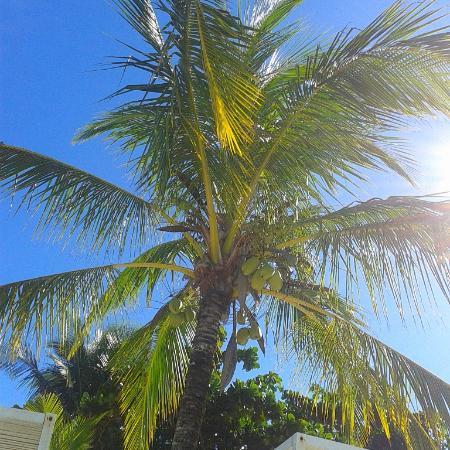 Cabana A Praia Branca: Coqueiro
