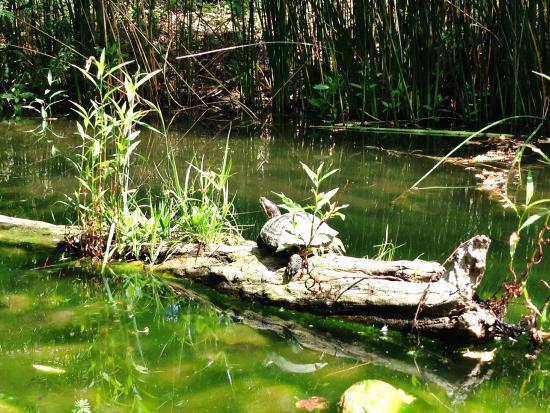 El Dorado Nature Center: Big guy
