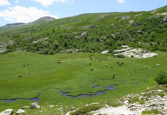 Haute-Corse, Francia: cavalli nella zona dei ruscelli