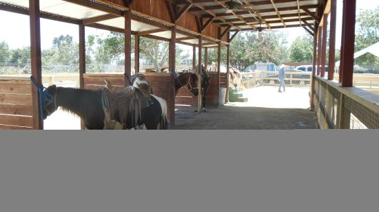 ZOOMARS Petting Zoo: Horses and ponies