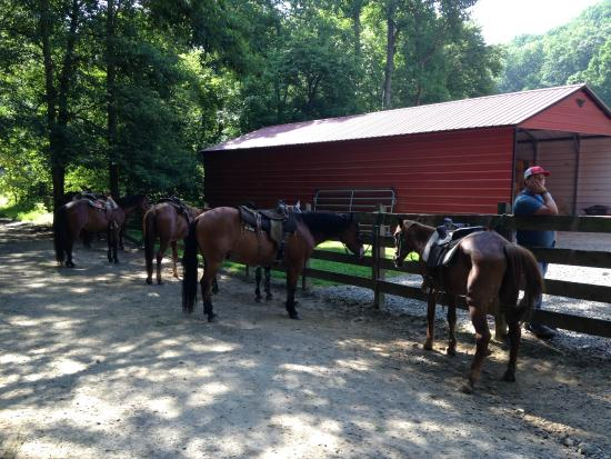 Chunky Gal Stables: Before the ride