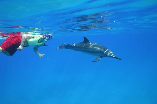 Dolphins and You!
