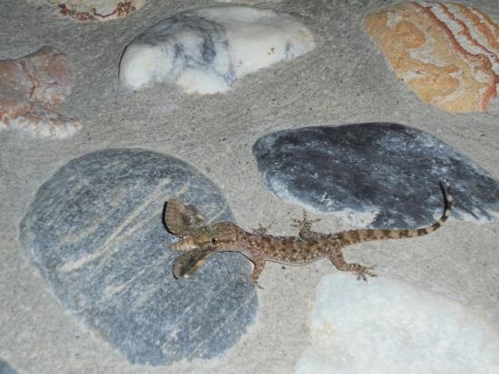 St.Nicholas Park Hotel: little lizard eating a moth