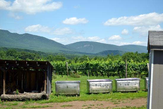 Star Tannery, VA: View of mountains from vineyard