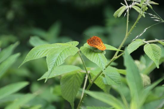 Millboro, فيرجينيا: Flora & Fauna